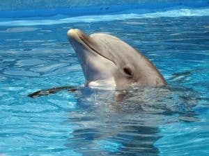 Sirius Starseeds can be drawn to dolphins.
